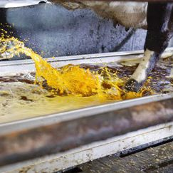 ванна для обработки копыт для хлева / из нержавеющей стали