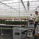 система погрузки/разгрузки для цветочных горшков / автоматическая