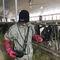 портативный ветеринарный эхограф / для крупного рогатого скота / для лошади / для овец