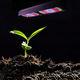 освещение для растениеводства / светодиодная / синяя / красная