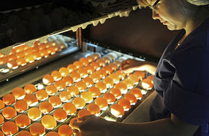 автоматический аппарат для браковки яиц