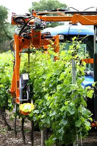 комбайн для сбора винограда