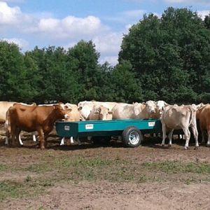 корыто для крупного рогатого скота
