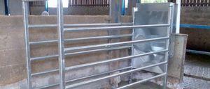 станция для кормежки для крупного рогатого скота