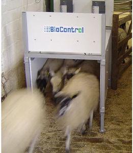 система идентификации для баранов