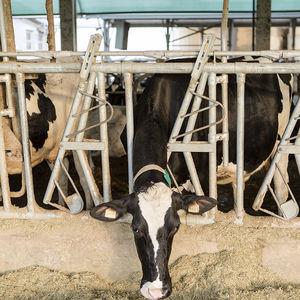 кормовая решетка для крупного рогатого скота