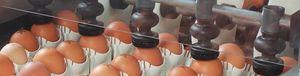 автоматическая маркировочная машина для яиц