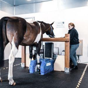 ветеринарная система МРТ для лошадей