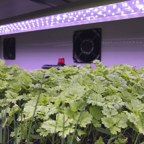освещение полосовой металл / для растениеводства / LED