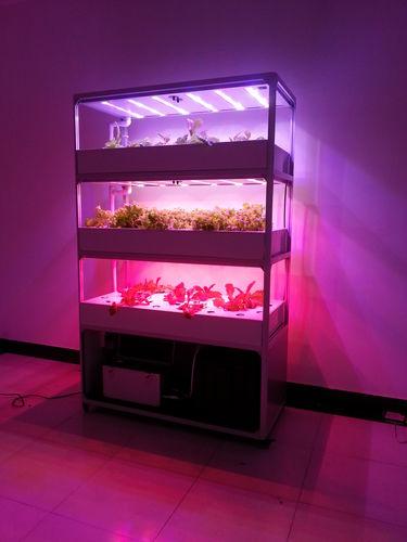 освещение для теплицы / для камеры для растений / LED / красная