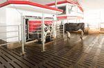 робот для дойки для коров / на несколько коров / с системой очистки / паровая дезинфекция
