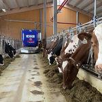 робот для кормежки для крупного рогатого скота / самоходный