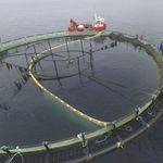 сеть для аквакультуры для сортировки рыбы
