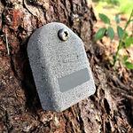 датчик движения дерева