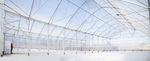 теплица мультитуннель / промышленная / стальная конструкция / с водосточным желобом