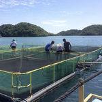 сеть для рыбной ловли для разделения резервуара с водой / из полиэтилена