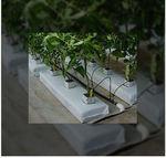 субстрат растений кокосовый торф