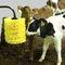 щетка для разведения скотаMini Calf Comfort BrushO'Donnell Engineering