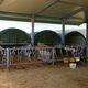 будка для разведения скота / для телят / коллективная / из стали
