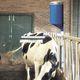 щетка для разведения скота / стационарная / для коров / горизонтальная