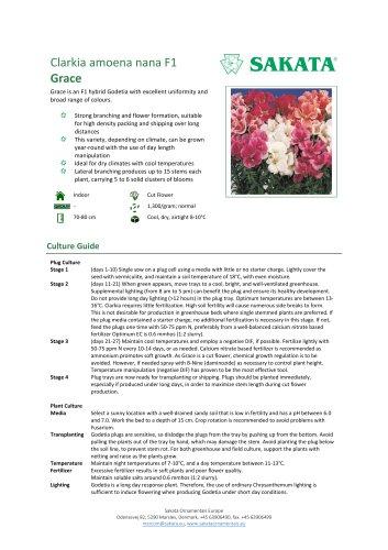 GRACE Clarkia amoena nana F1